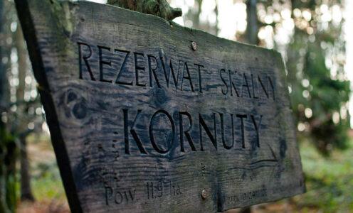 Rezerwat Kornuty – chodźmy na wycieczkę w Beskidzie Niskim